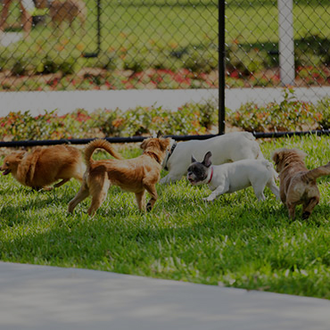 Large Dog Park at Summerwood Apartments
